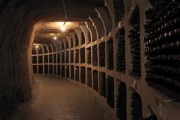 Escursioni vinicole